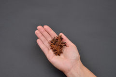 Hand of a woman holding a pile of anise isolated on black backgr Royalty Free Stock Image