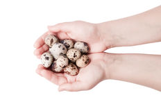 The hand of a woman with quail eggs. Stock Photo