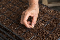 Hand woman sowing cucumber seeds Royalty Free Stock Photos