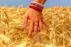 Hand woman touch barley field Royalty Free Stock Photo
