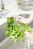 Hand of woman washing vegetable Stock Photography