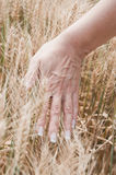 Hand of woman on a wheat field Stock Images