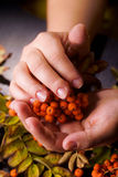 Hand of a woman who keeps a branch of mountain ash royalty free stock photo