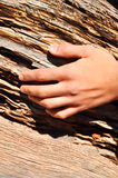 Hand on wood. Hand over old fallen tree trunk Royalty Free Stock Image