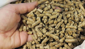 Hand and wood pellets Royalty Free Stock Images