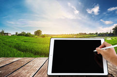 Hand writing on digital tablet with wooden balcony, at green rice field in sunrise. Hand writing on digital tablet with wooden balcony,at green rice field in Stock Photo