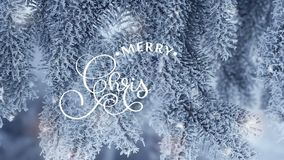 Hand Writing white Merry Christmas animation calligraphy lettering text on snowly fir-tree branches background For video. Greeting card. Happy feeling stock footage