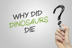 Hand writing why did dinosaurs die. On grey background Stock Photos