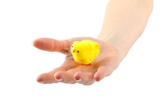 Hand with yellow chick Stock Photography