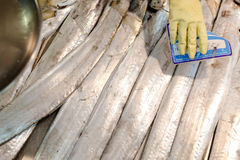 Hand in yellow glove with pricetag above long. Picture of long silver ribbonfish on market display. Hand in yellow glove with pricetag on marketplace background Royalty Free Stock Images