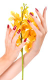 Hand with yellow orchid Royalty Free Stock Image