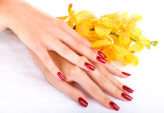 Hand with yellow orchid Stock Photography