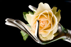 Hand with yellow rose Stock Photo