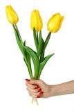 Hand with yellow tulips Royalty Free Stock Photography
