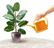 Watering Ficus Realistic Illustration. Hand with yellow watering can during irrigation of ficus standing on light table realistic vector illustration Royalty Free Stock Image
