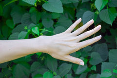 Hand of young girl on green leafs background. Ecology Royalty Free Stock Photos