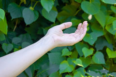 Hand of young girl on green leafs background. Hands of young girl on green leafs background. Ecology Stock Photos