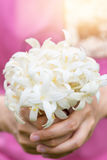 Hand of young holding a bouquet of jasmine with sun light. Stock Images