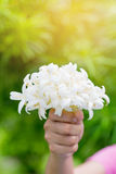 Hand of young holding a bouquet of jasmine with sun light. Royalty Free Stock Image