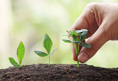 Hand with Young Plant Growing In Sunlight stock image