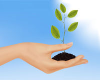 Hand with young plant. Vector Royalty Free Stock Photography