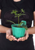 Hand with young seedlings of parsley. In small pot Stock Photo