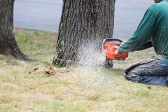 Handarbeider die de boomboomstam snijden stock afbeelding