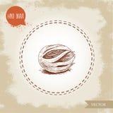 Handattraktion skissar ny muskotnötmuskotblomma för stil Krydda- och smaktillsatsvektorillustration Royaltyfria Bilder
