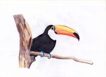 Handattraktionfågel Arkivfoton