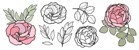 Handattraktionlinjen vektorblommor ställde in för kort Pion rosa illustration Blom- Logo Design stock illustrationer