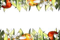 Handattraktionmall av mandarinen, sidor och blommor Teckningsmarkörer royaltyfria foton