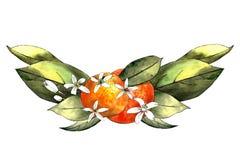 Handattraktionmall av mandarinen, sidor och blommor Teckningsmarkörer royaltyfri foto
