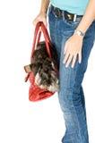 Handbag. Cute puppy inside a handbag Royalty Free Stock Photography