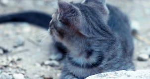 Handbediend schot van katje het spelen stock video