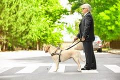 Handbokhund som hjälper den blinda mannen Arkivfoton