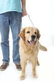 Handbokhund som isoleras på vit Fotografering för Bildbyråer