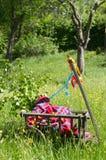 Handcart na zielonej łące w wiośnie na ojca dniu zdjęcia stock