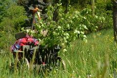 Handcart na zielonej łące w wiośnie na ojca dniu obrazy stock