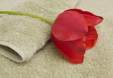 Handdoek en Tulip Spa Stock Foto's