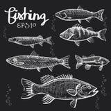 Handdraw de Fishs sur le tableau noir Photos libres de droits