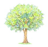 Handdrawing da árvore do verão isolado no branco Foto de Stock