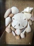 handdrawn απομονωμένα απεικόνιση κοχύλια καρδιών Στοκ Εικόνα