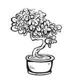 Handdrawn διακοσμητικό ασιατικό δέντρο μπονσάι στο δοχείο Στοκ Φωτογραφίες