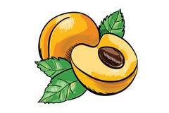 Handdrawn желтый абрикос Стоковые Фотографии RF