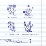 Handdrawn иллюстрация - комплект здоровья и природы Стоковое фото RF