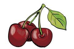 Handdrawn красная вишня Стоковое Фото