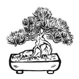 Handdrawn decoratieve Aziatische bonsaiboom Stock Afbeelding