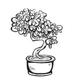 Handdrawn decoratieve Aziatische bonsaiboom in de pot Stock Foto's
