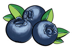 Handdrawn fresh Blueberry Stock Images