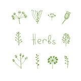 Handdrawn herbal elements in  Stock Photo